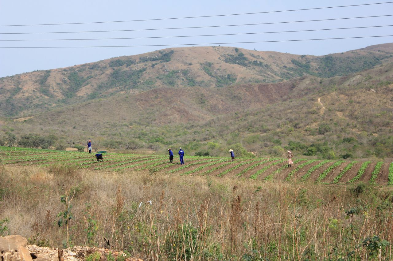 A few of the local staff working in the fields. Project Canaan employs over 280 people.